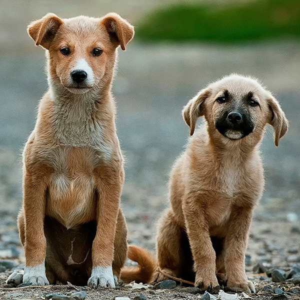 Image of two puppies